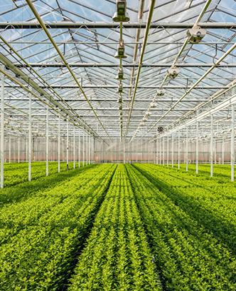 荷兰平米农业