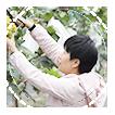 嘉兴昌朋园林景观有限公司