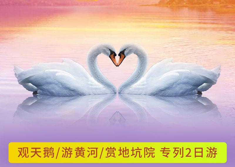观天鹅/游黄河/赏地坑院 专列2日游