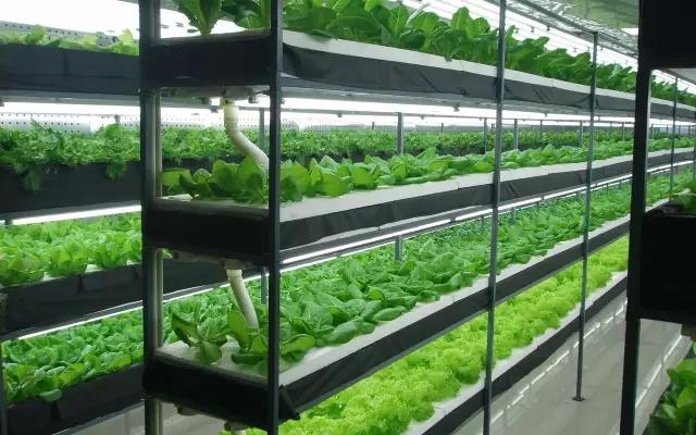 脱水蔬菜的市场现状分析