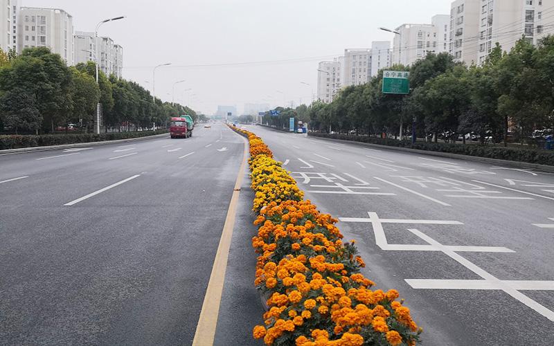 肥东县龙泉路(合蚌路-站北路)道路工程