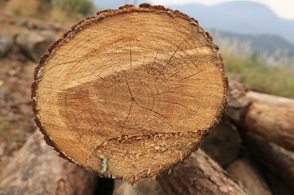 快速辨别真假实木家具的方法