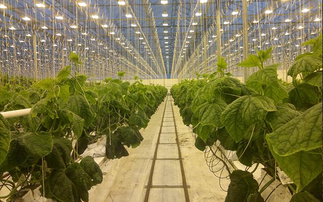 脱水蔬菜行业如何避免重金属雷区?