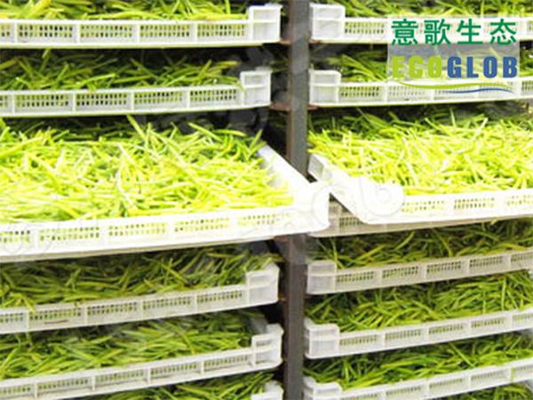 黃花菜烘干機